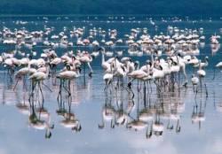 Кения 2021 - почивка в Момбаса